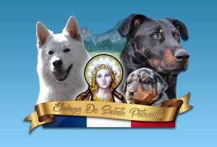 Logo élevage Sainte Pétronille